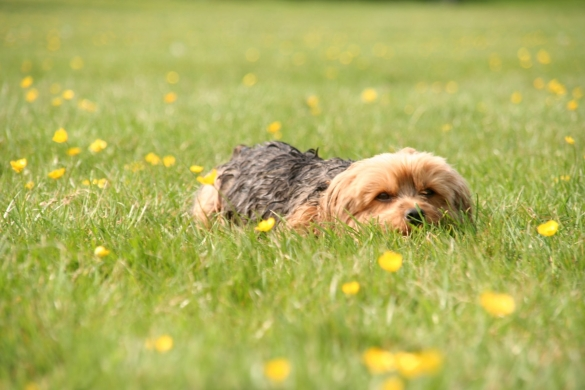 9 To 5 Dog Walks Provide Professional Dog Walking Services Ipswich Suffolk Make Your Dog Happy While You Are Working Full Time Also Able To Visit Cats And Small Pets At Home